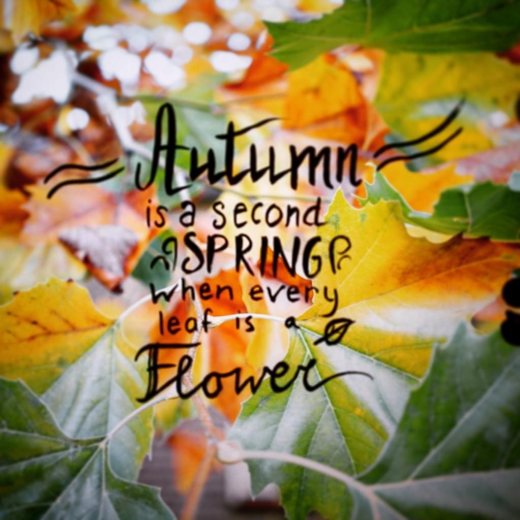 autumn strobista